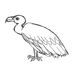 sitting vulture side view vector image
