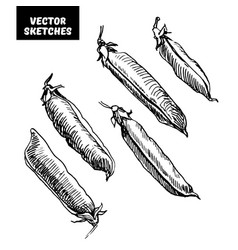 set of sketches vector image vector image