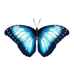 single blue butterfly morpho on a white background vector image vector image