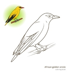 African Golden Oriole bird coloring book vector