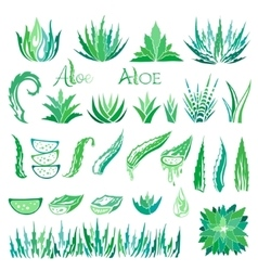 Aloe vera design elements Icons collection vector image