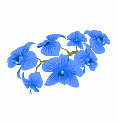 blue orchid vector image