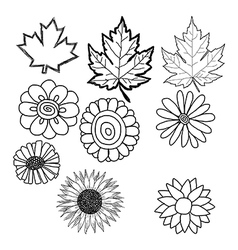 Doodles of flower and leaf vector