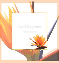 Exotic tropical bright orange strelitzia bird of vector