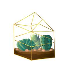 green succulent plant in geometric terrarium vector image