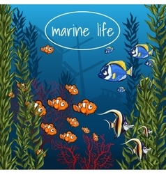 Marine life in bright colors vector image