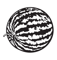 Perfect whole striped watermelon with curled up vector