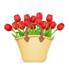 wicker basket with tulip vector image