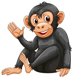A chimpanzee vector
