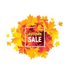 autumn sale flyer with maple leaves on white vector image