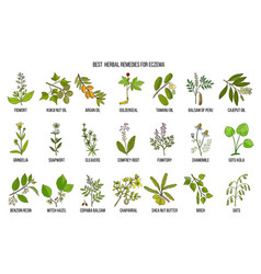 Best medicinal herbs for eczema vector