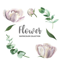 Set watercolor pink peony and foliage paint vector