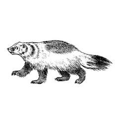 Wild badger forest animal symbol north vector