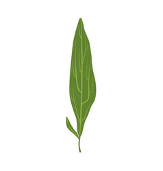 Willow tree green leaf vector