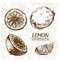 digital detailed lemon hand drawn vector image