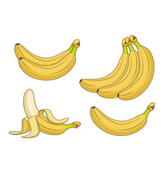 Cartoon banana fruits bunches of fresh bananas vector