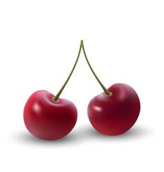 cherry berries vector image