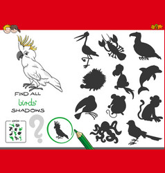 Educational shadows game with birds characters vector