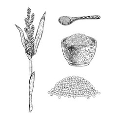 hand drawn set of millet sketch vector image