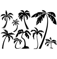 silhouettes tropical palm trees vector image