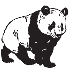 panda black white vector image vector image