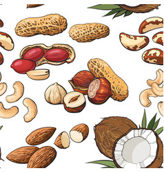 seamless pattern of various nuts on white vector image
