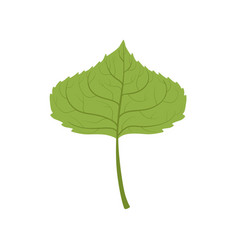 Aspen tree green leaf vector