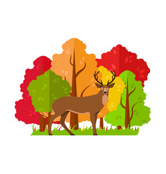 deer in the autumn forest vector image