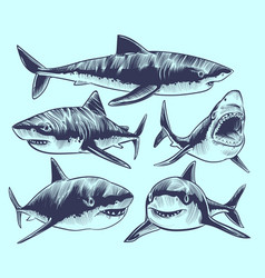 sketch shark swimming sharks with open mouth vector image