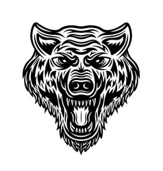 wolf head isolated detailed vector image