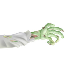 halloween zombie arm vector image vector image