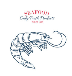 hand drawn shrimp icon vector image