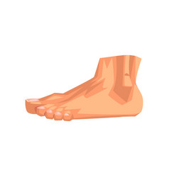 Male foot human body part on vector