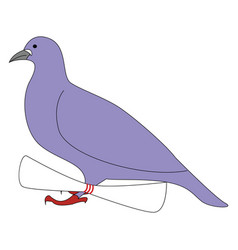 purple pigeon on white background vector image