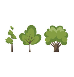 thin and thick trees decorative trees icon set vector image