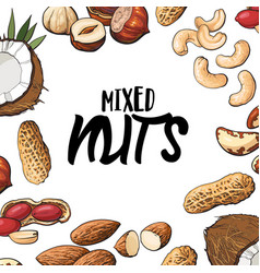 square banner of various nuts with round place for vector image
