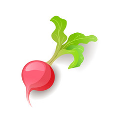 Bright pink radish with green leaf icon isolated vector