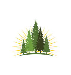 cedar tree icon vector image