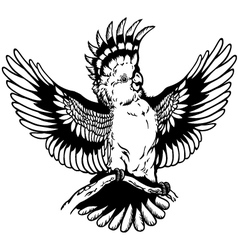 cockatoo black white vector image