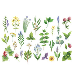 hand drawn watercolor set herbs and vector image