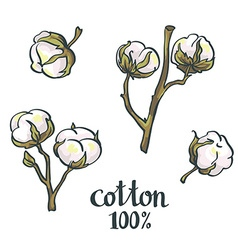 Natural Cotton set vector