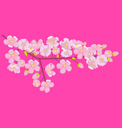 Pink cherry blossom on branch with bud or shoots vector