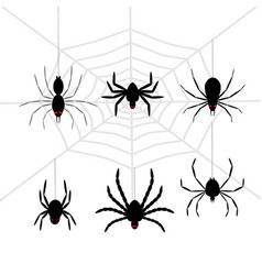 scary black halloween spider set vector image