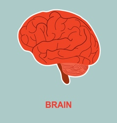 Human brain anatomy vector image vector image