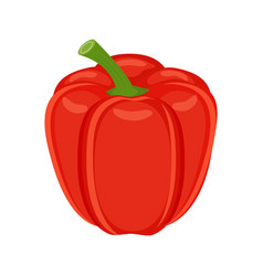 colorful red bell pepper vegetable vector image