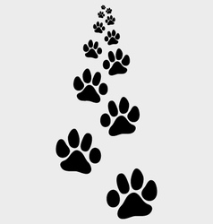 footsteps of cat vector image