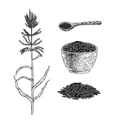 Hand drawn set of wild rice sketch vector
