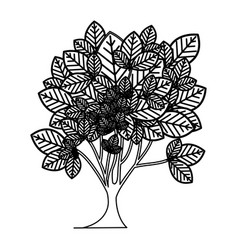 Sketch silhouette leafy tree plant with vector