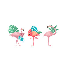 Flamingo in different poses with tropical leaves vector