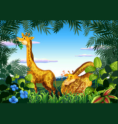 giraffe in the nature vector image